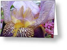 Iris Flower Art Purple Lavender Irises Giclee Prints Baslee Troutman  Greeting Card