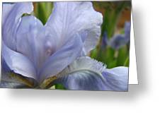 Iris Flower Blue 2 Irises Botanical Garden Art Prints Baslee Troutman Greeting Card