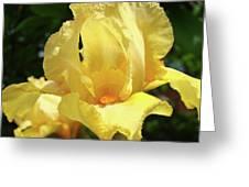 Iris Flower Floral Art Prints Orange Irises Greeting Card