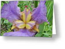 Iris Flower Lavender Purple Yellow Irises Garden 19 Art Prints Baslee Troutman Greeting Card