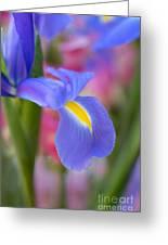 Iris Flower Greeting Card
