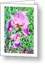 Iris Flower Photograph I Greeting Card