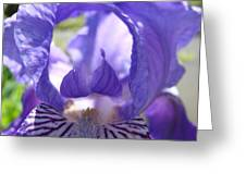 Iris Flower Purple Irises Floral Botanical Art Prints Macro Close Up Greeting Card