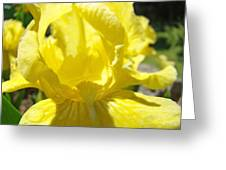 Iris Flower Yellow Macro Close Up Irises 30 Sunlit Iris Art Print Baslee Troutman Greeting Card