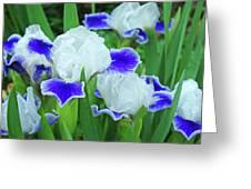 Iris Flowers Art Prints Blue White Irises Floral Baslee Troutman Greeting Card