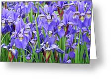 Iris Flowers Artwork Purple Irises 9 Botanical Garden Floral Art Baslee Troutman Greeting Card