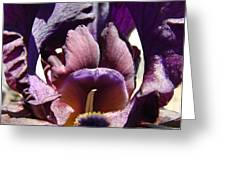 Iris Flowers Purple Irises Artwork Prints Framed Canvas Cards Nature Gardens Greeting Card