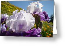 Iris Flowers Purple White Irises Poppy Hillside Landscape Art Prints Baslee Troutman Greeting Card