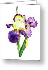 Iris Flowers Watercolor  Greeting Card