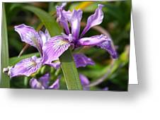 Iris Haiku Greeting Card