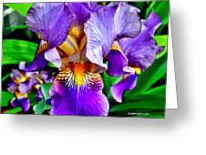 Iris In Bloom Greeting Card