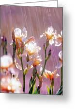 Iris In Rain Greeting Card