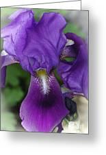 Iris In The Mist Greeting Card