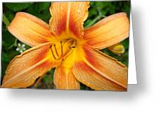 Iris In The Morning Greeting Card