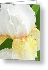 Iris In The Rain II Greeting Card