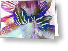 Iris Iv Greeting Card