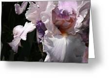 Iris Lace Greeting Card