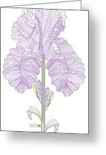 Iris Line Drawing Two Greeting Card
