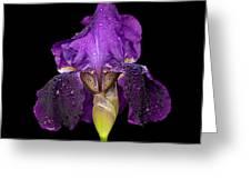 Iris On Black Greeting Card