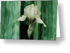 Iris On Green Greeting Card