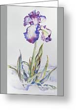 Iris Passion Greeting Card