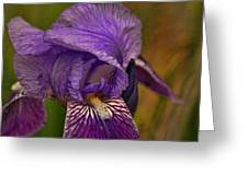 Iris Popping Out Greeting Card