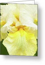 Iris Pride Of Ireland Greeting Card