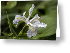 Iris Profile Greeting Card