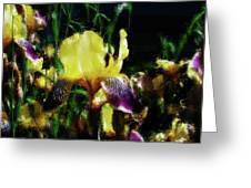 Iris Purple And Yellow Greeting Card