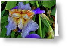 Iris Rain Blue Greeting Card