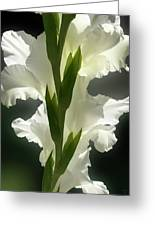 Gladiolus Spectacular #2 Greeting Card