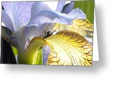 Iris Spider Greeting Card