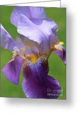 Iris Spirit Greeting Card