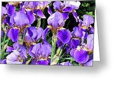 Iris Splendor Greeting Card