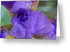 Iris Square Greeting Card