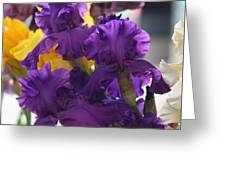 Iris Study Greeting Card