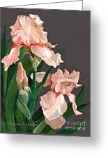 Iris Study Greeting Card by Suzanne Schaefer