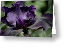 Iris - Superstition Greeting Card