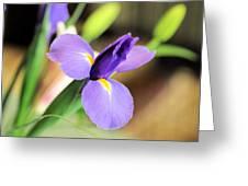 Iris Unfolding IIi Greeting Card