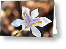 Iris Wide Open Greeting Card