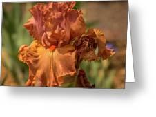 Iris_dsc4793_16 Greeting Card