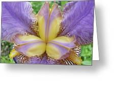 Irises Art Purple Yellow Iris Flowers Giclee Prints Baslee Troutman  Greeting Card