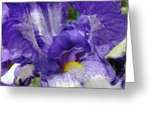 Irises Artwork Purple Iris Flowers Art Prints Canvas Baslee Troutman Greeting Card