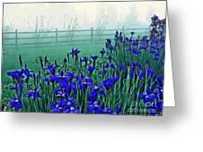 Irises At Dawn 3 Greeting Card