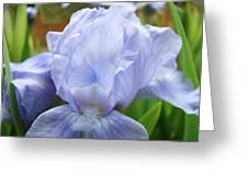 Irises Blue Iris Flower Light Blue Art Flower Soft Baby Blue Baslee Troutman Greeting Card
