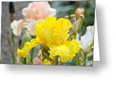 Irises Botanical Garden Yellow Iris Flowers Giclee Art Prints Baslee Troutman Greeting Card