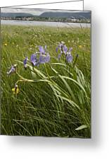 Irises By The Sea Greeting Card