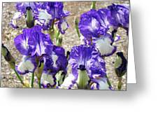 Irises Floral Art Iris Flowers Purple White Baslee Troutman Greeting Card