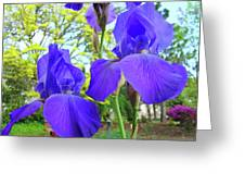 Irises Floral Garden Art Print Blue Purple Iris Flowers Baslee Troutman Greeting Card