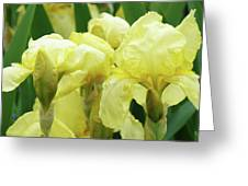 Irises Flower Garden Yellow Iris Baslee Troutman Greeting Card